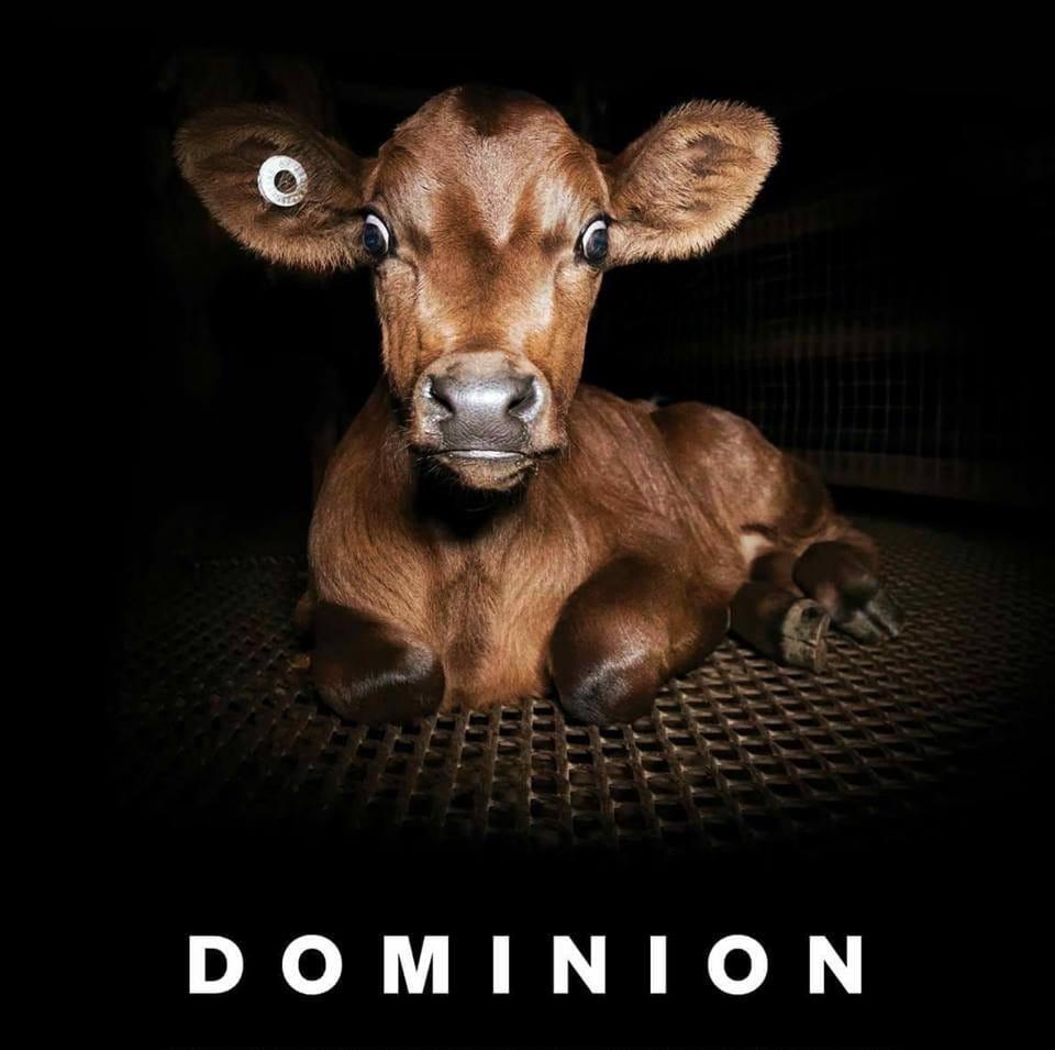 Dominion flim